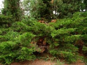 La dégradation de la végétation montre la lente disparition du parc