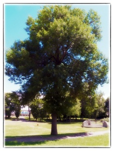 Il faut cesser d'abattre les arbres du parc Morgan