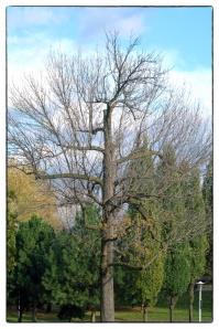 Il ne faut plus abattre les arbres du parc Morgan