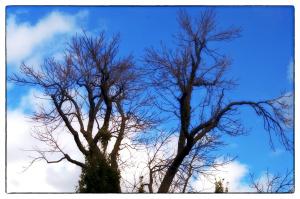 Il faut cesser d'abattre les grands arbres adultes du parc Morgan