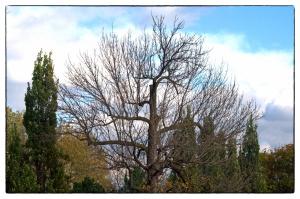 Il faut cesser d'abattre les arbres adultes du parc Morgan