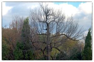 Il faut cesser d'abattre les grands arbres du parc Morgan